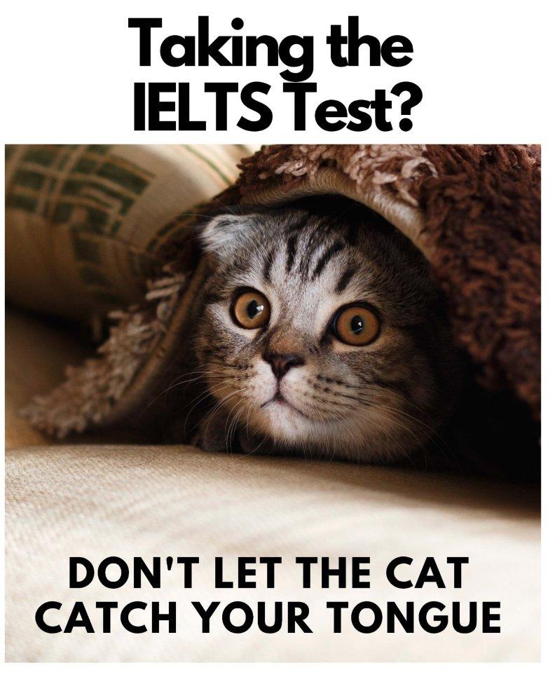 The Boston School IELTS Cat Poster